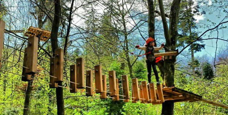 Forest Adventures -