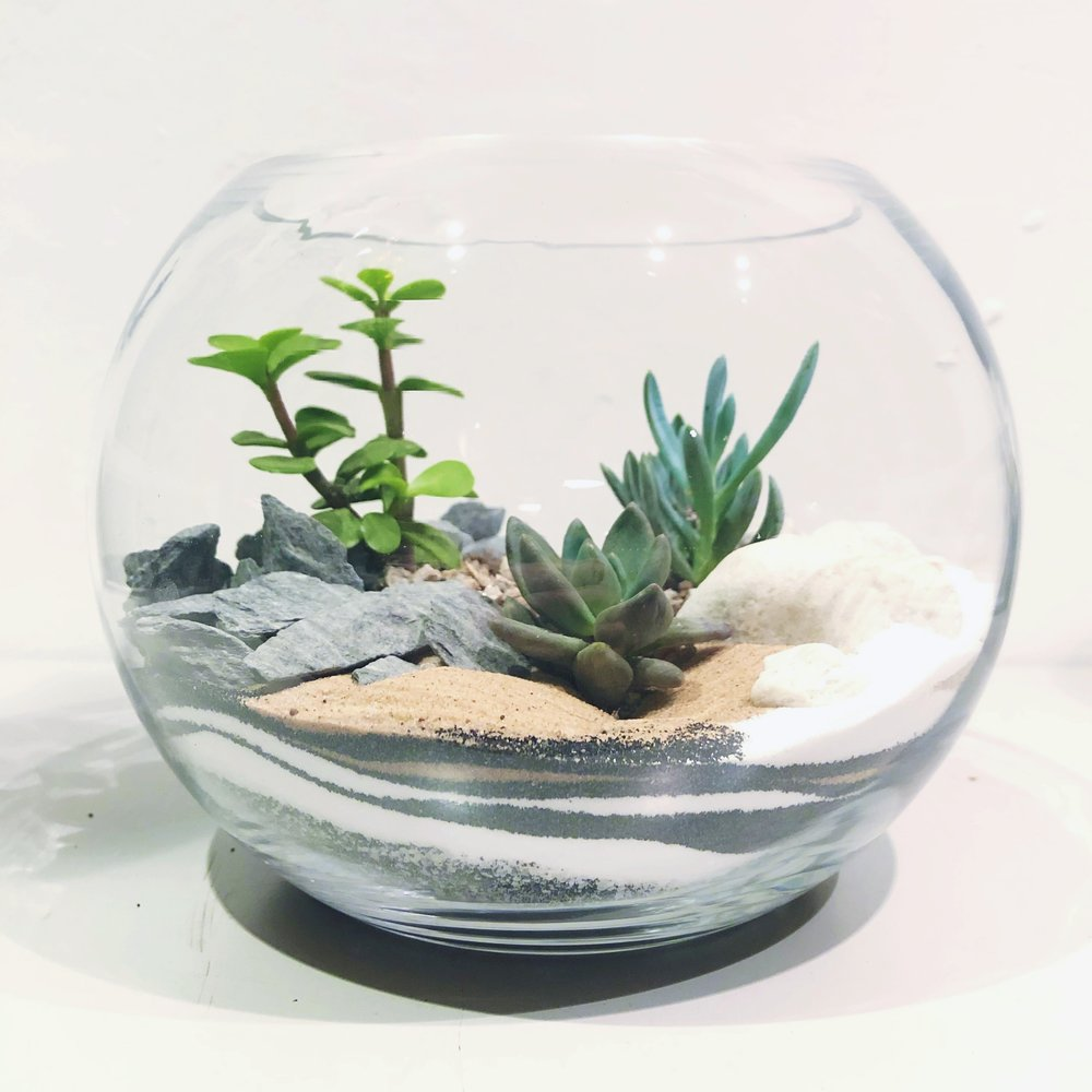 Heron Hawker Terrarium Plants Kits Workshops London