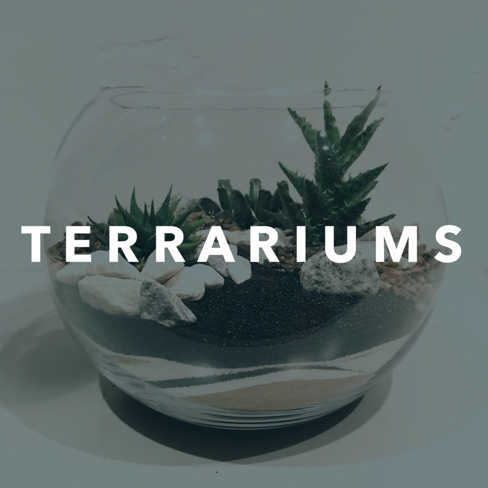 Terrariums for sale in North London