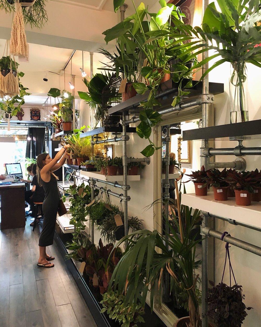 Plant shop pop up