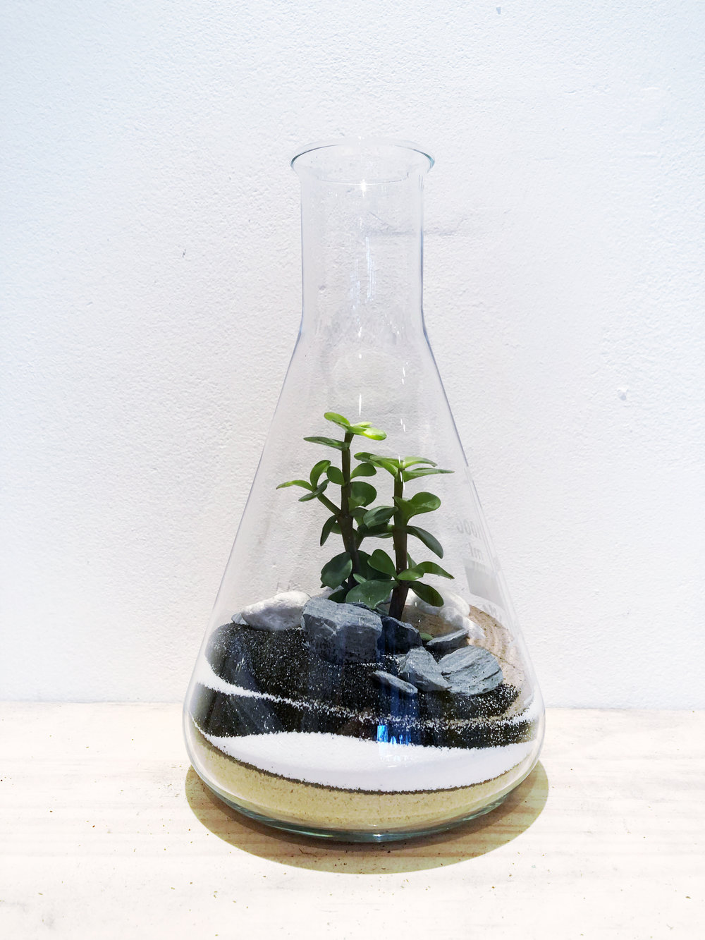 Science Conical Beaker Terrarium
