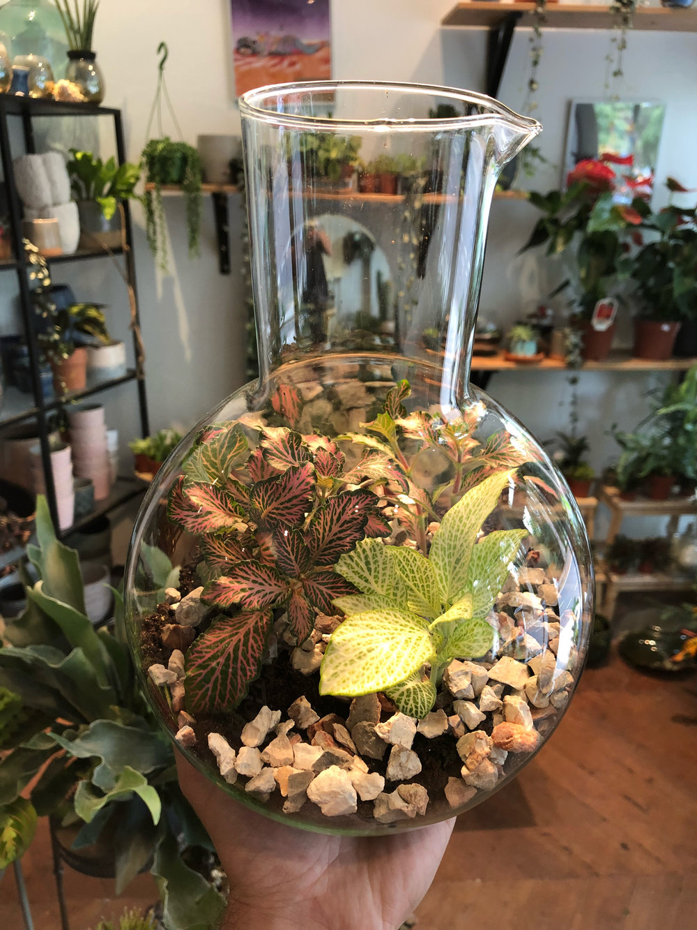 Science fittonia terrarium