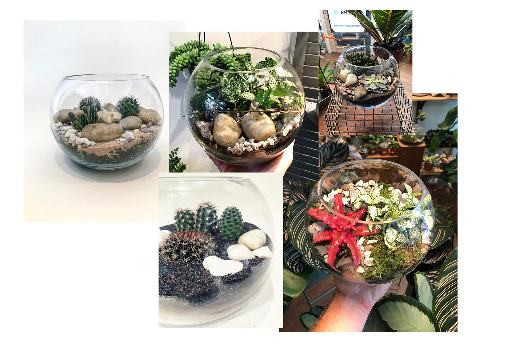 Pre Order Terrarium Builder Heron Hawker Terrarium Plants Kits