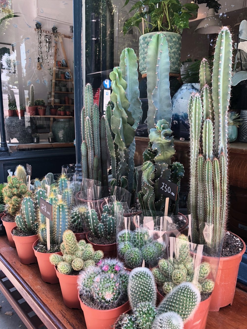 How Often Should I Feed A Cactus Heron Hawker Terrarium Plants