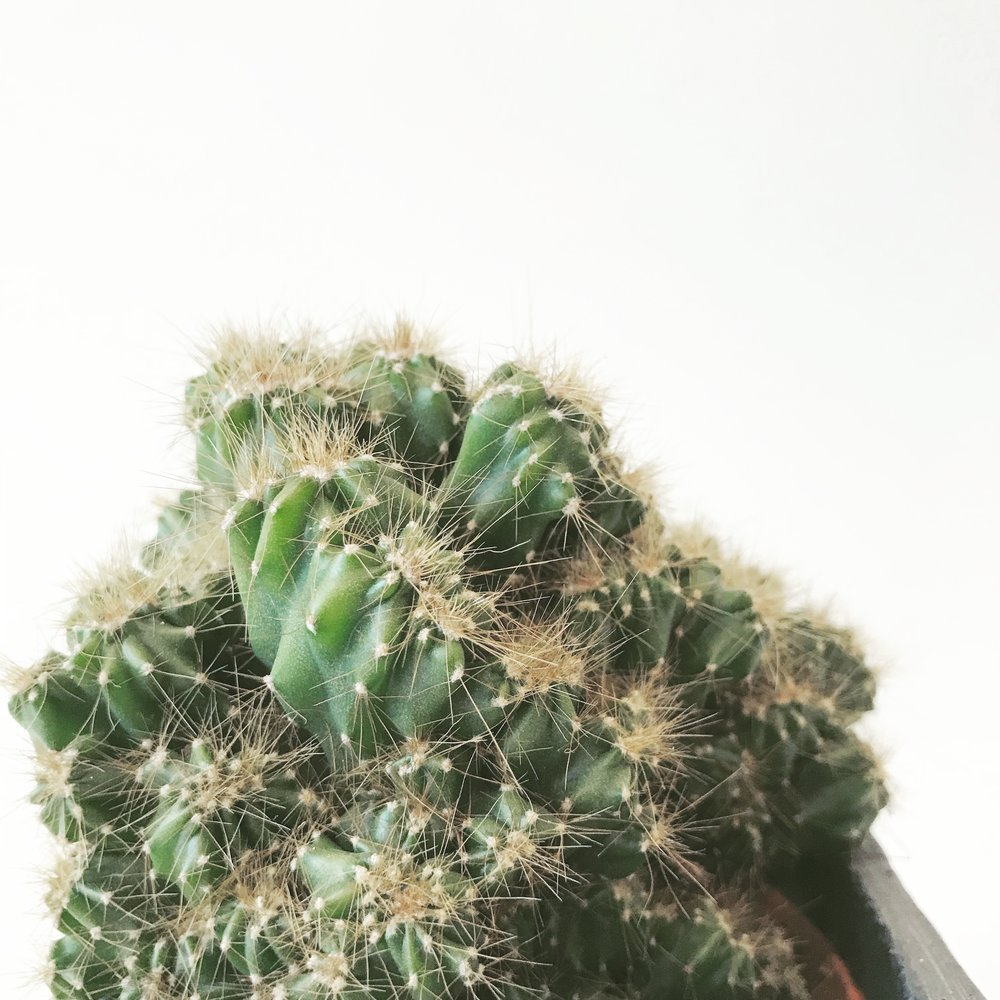 types of cactus, water a cactus, how often to water a cactus indoors, how to water a succulent