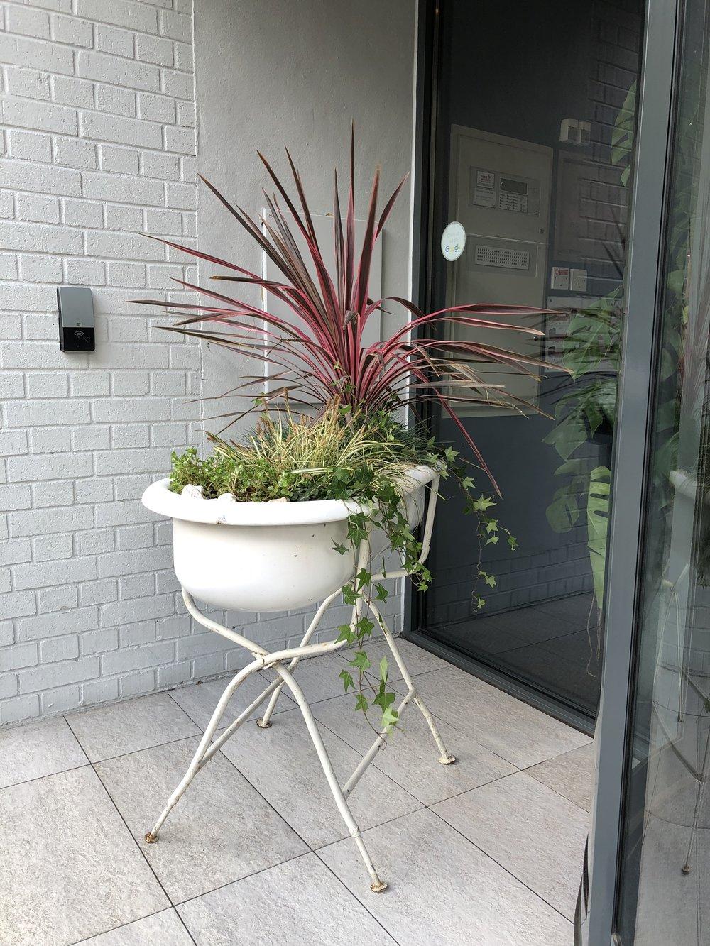 Vintage bath tubs outdoor planter in London