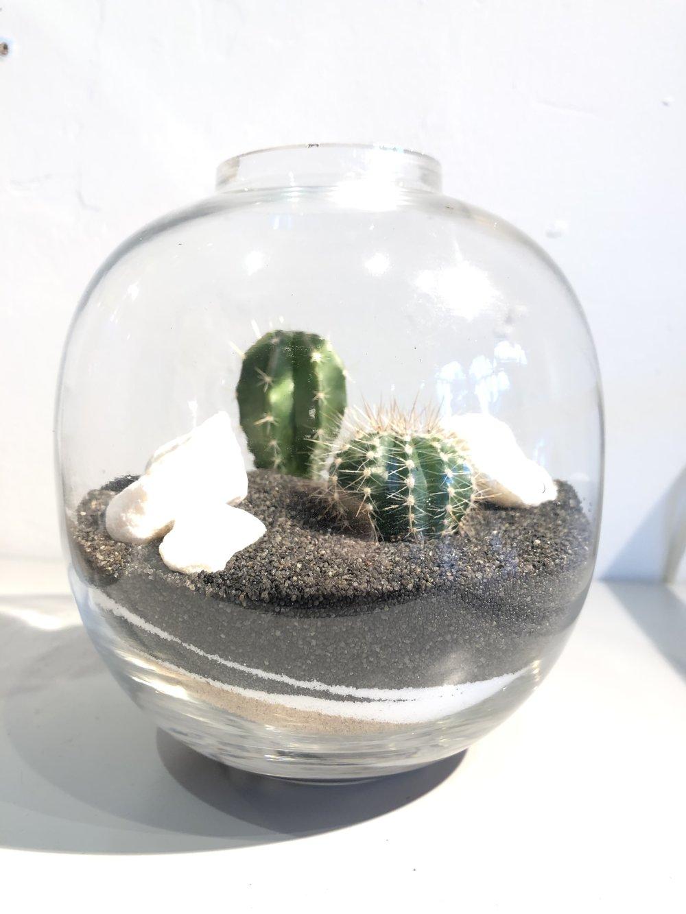A pillar and barrel cactus placed in an open cactus terrarium.