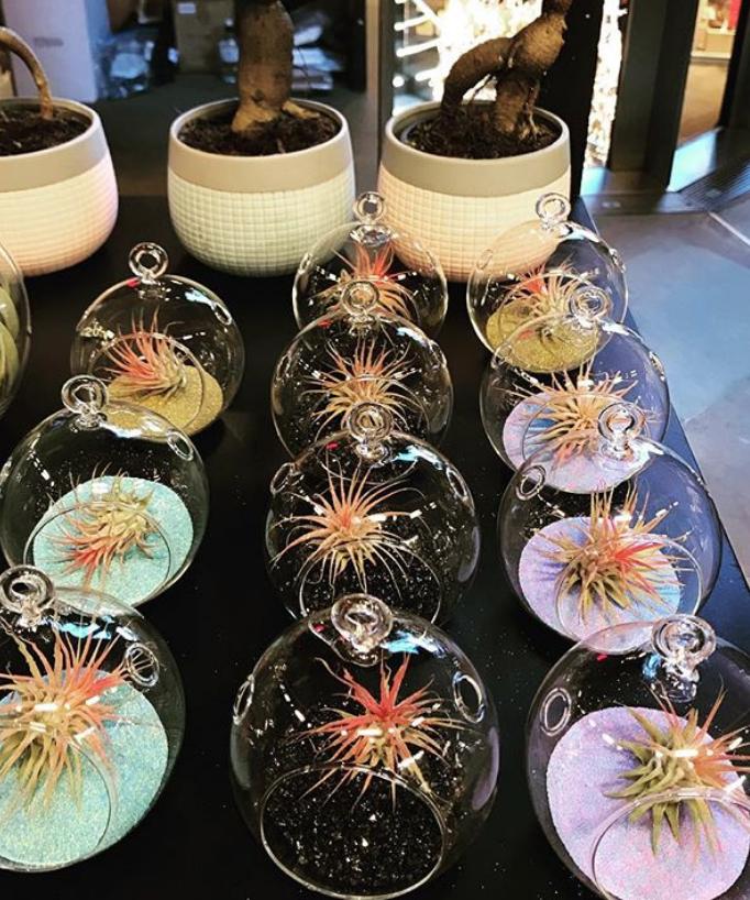 Wedding terrariums air plants
