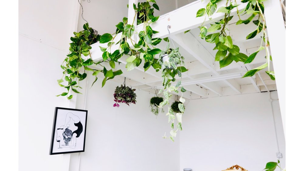 Trailing Devils Ivy Indoor Plant Installation Services north London Plant Ceiling.JPG