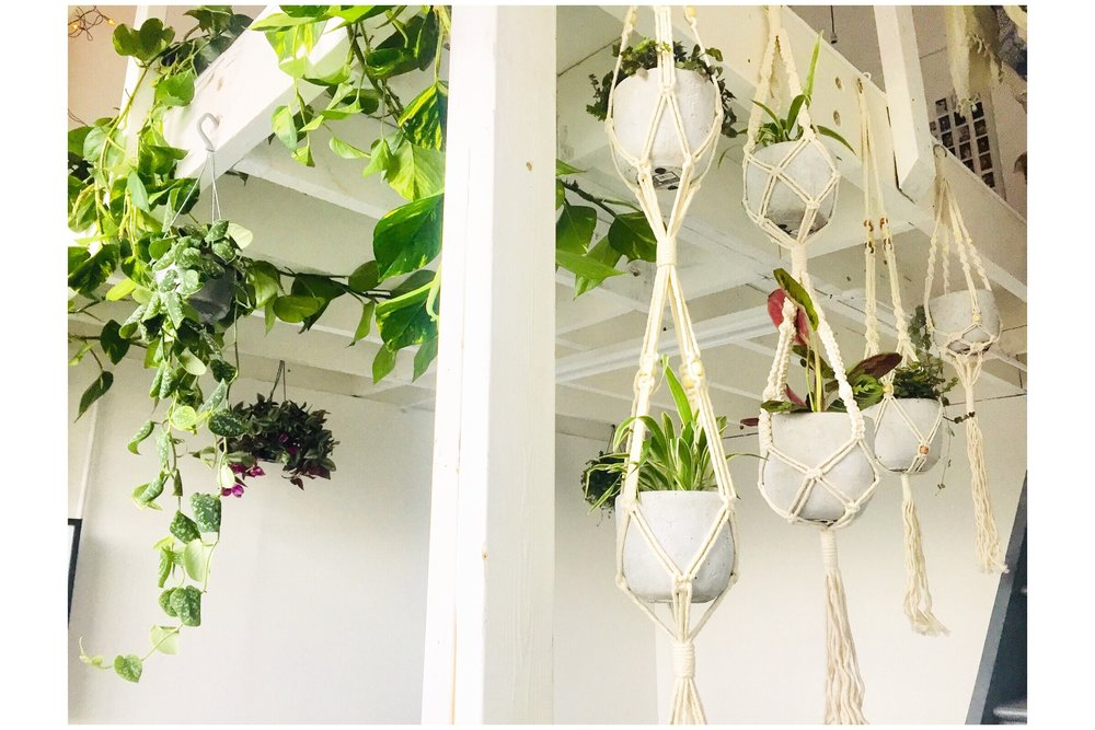 indoor plants uk — Read our Blog & learn about how to make a