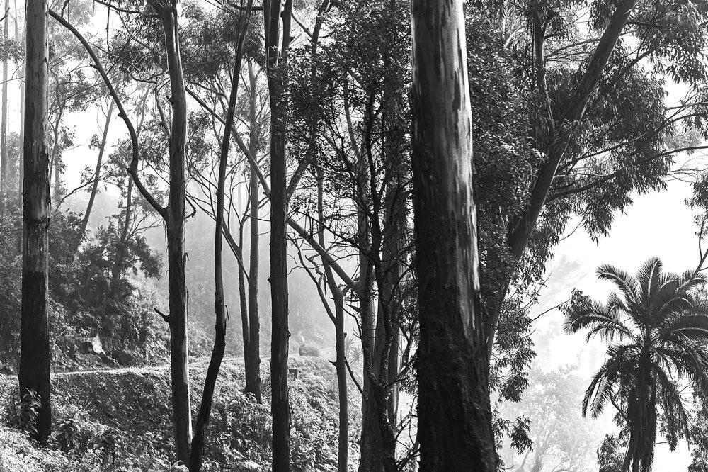 The Trees 2 copy.jpg