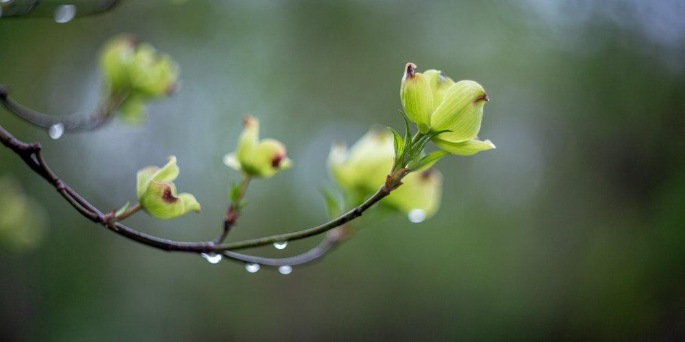 Spring bloom-3.jpg