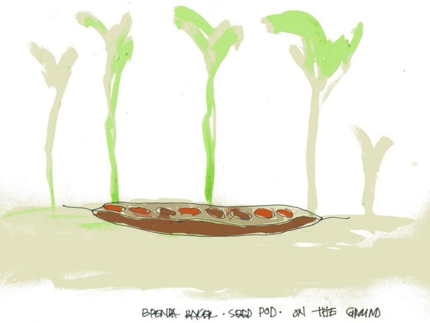 Brenda Leigh Baker, Seed Pod proposal