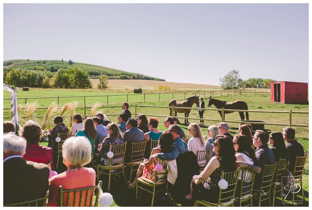 Guest and horses at acreage wedding