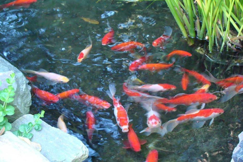 fish_web.jpg