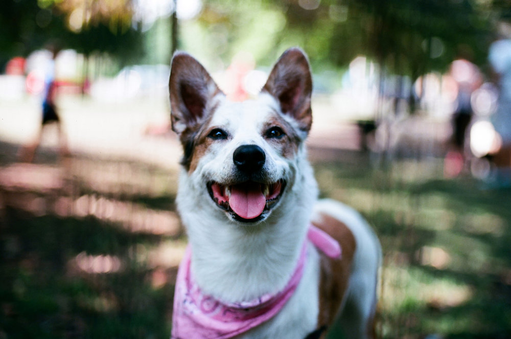 35mm photo of a beautiful dog named Cilantro