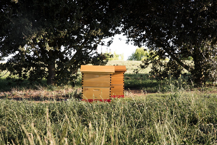 Honey Bees at Mona Farm