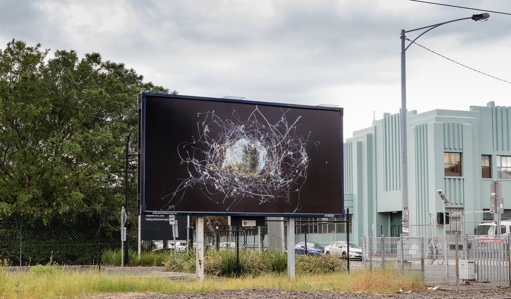 Found bird's nest of plastic netting and other unnatural fibres , 2016. Detail on billboard, MoreArt festival, 2016. Dawson St, Brunswick, Melbourne.  Displayed for 6 months from October 2016-May 2017