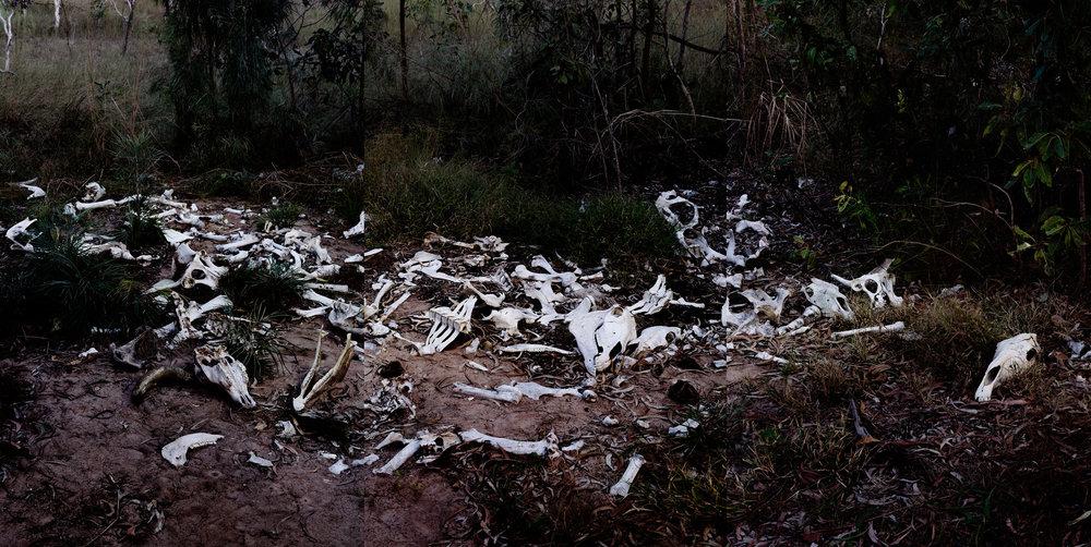 Bones, Humpty Doo, Northern Territory,  2016  Pigment print on platine fibre paper, triptych, 107x213cm
