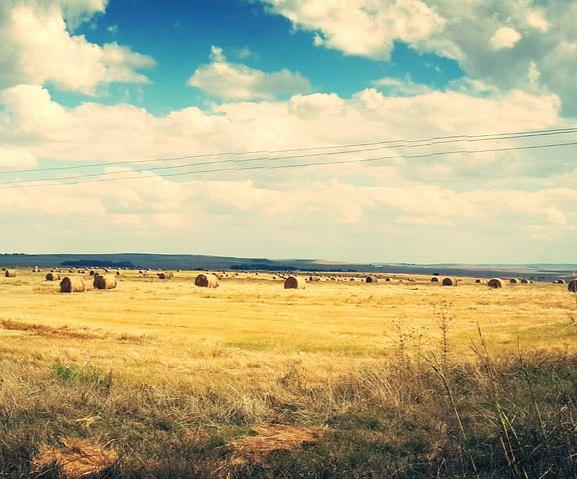 agriculture-1868013__480.jpg