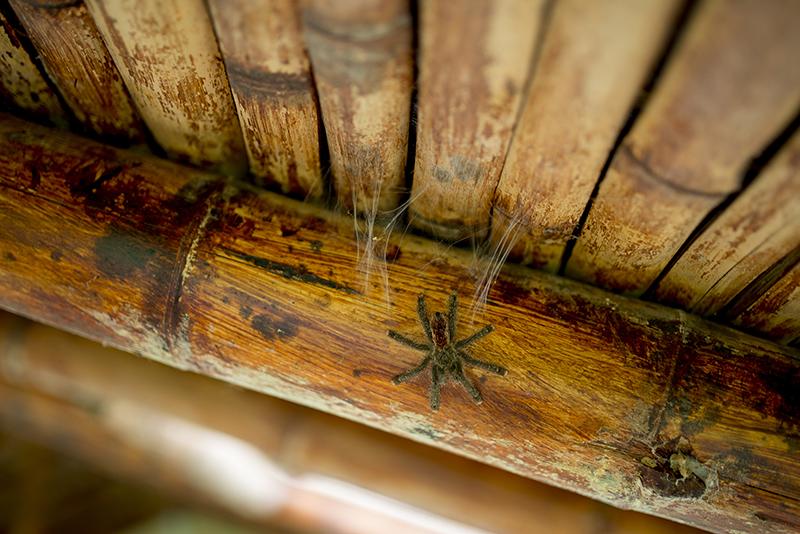 Wisom Forest-Ecuador--Documentary-Photographer93