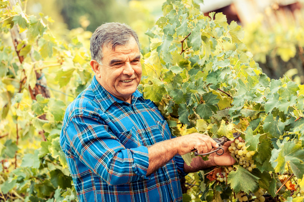 Wineries and Vineyards -