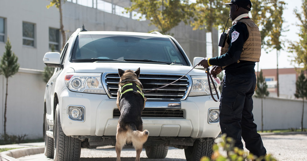 Canine-Security-Banner.jpg