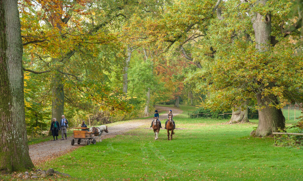 Enjoy the shifting seasons in the park. Bosjökloster is open all days all year.