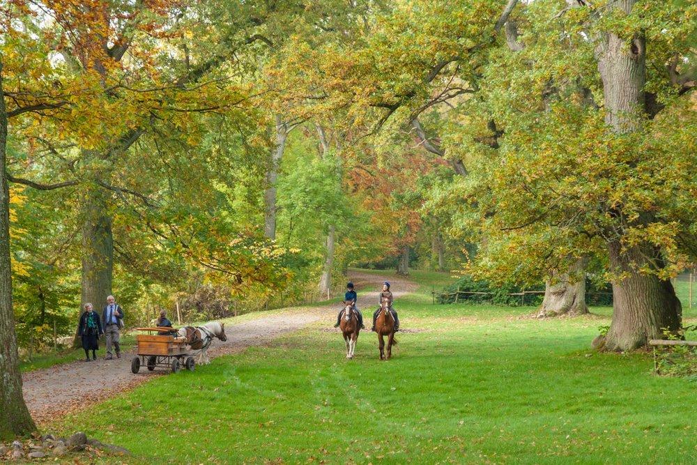 Njut av årstidernas skiftningar i parken - öppet alla dagar hela året