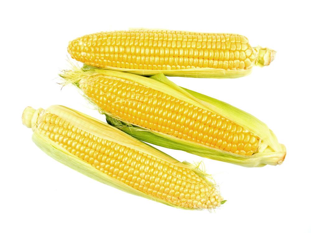 maize-isolated-on-white-background_Gk6FjkD_.jpg