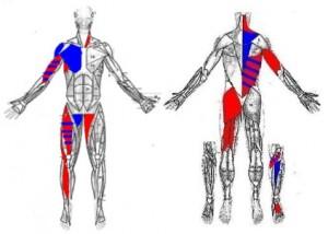 Trigenics-body-chart-300x214.jpg