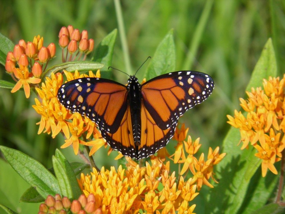 Flying Friends Throughout the Landscape - Birds, Hummingbirds, Butterflies and more! Find out what flying friends to expect in our neck of the woods, and what plant to install to help attract more.