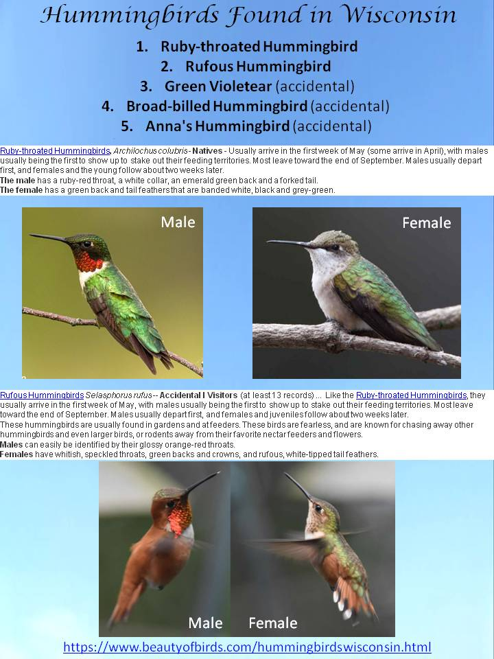 Hummingbirds Found in WI.jpg