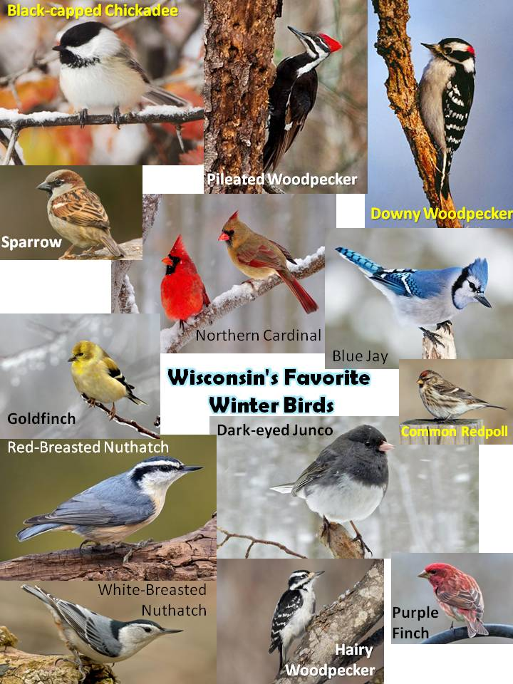 WI Favorite Winter Birds.jpg