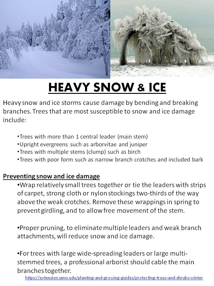 Heavy Snow and Ice