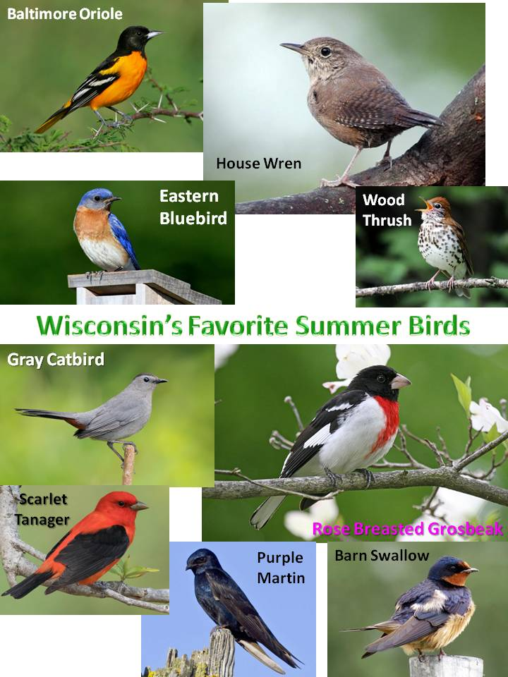 WI Favorite Summer Birds.jpg