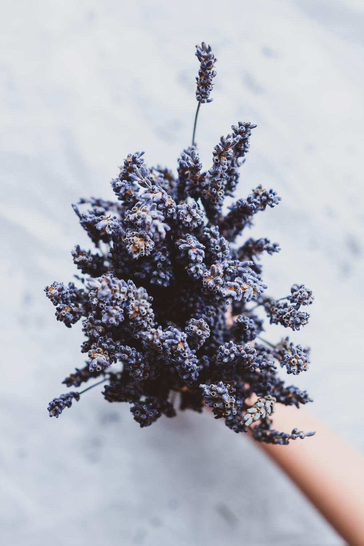 Lavender_bath_melts-17.jpg