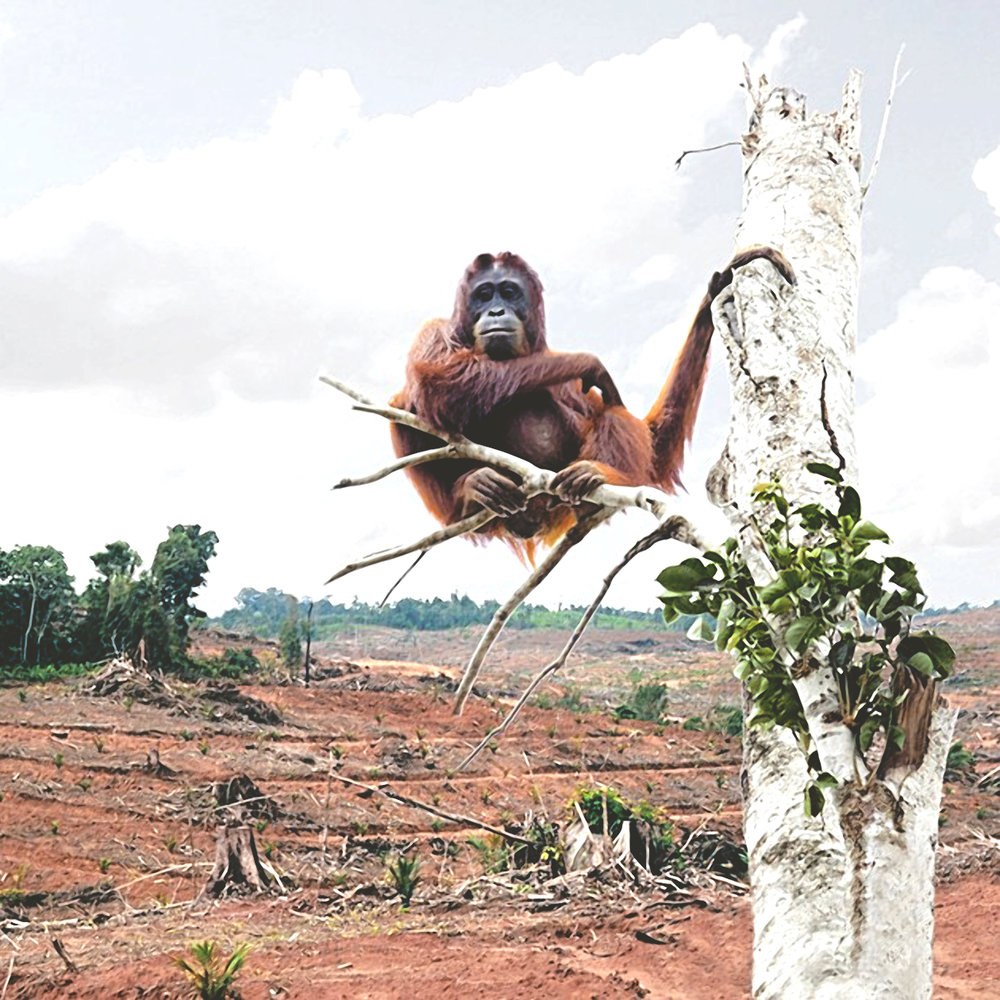 Sustainable-Palm-Oil.jpg