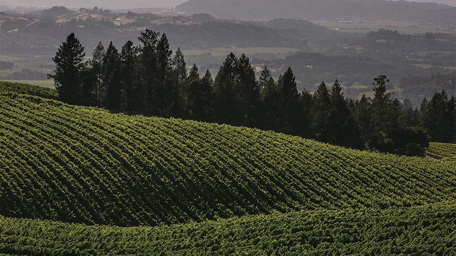 Bevill-Vineyard-California.jpg