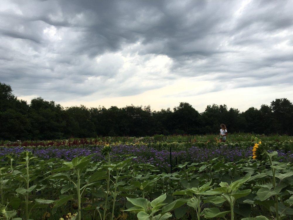 in the field -