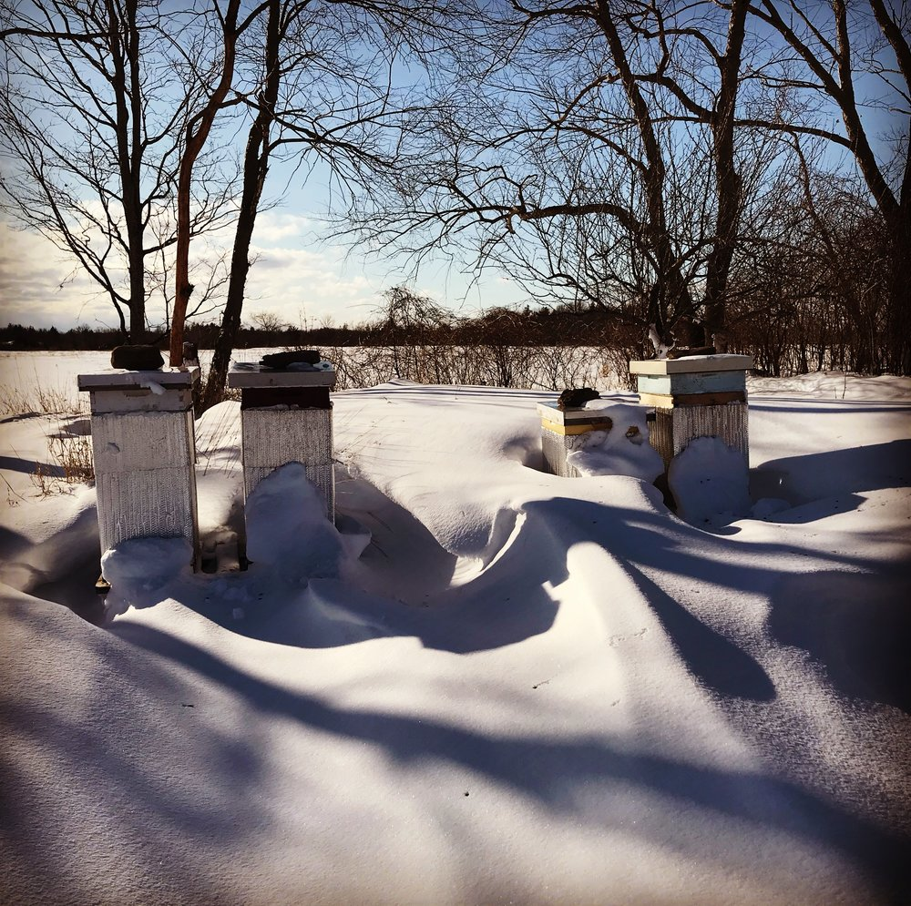Our home hives after a snowstorm