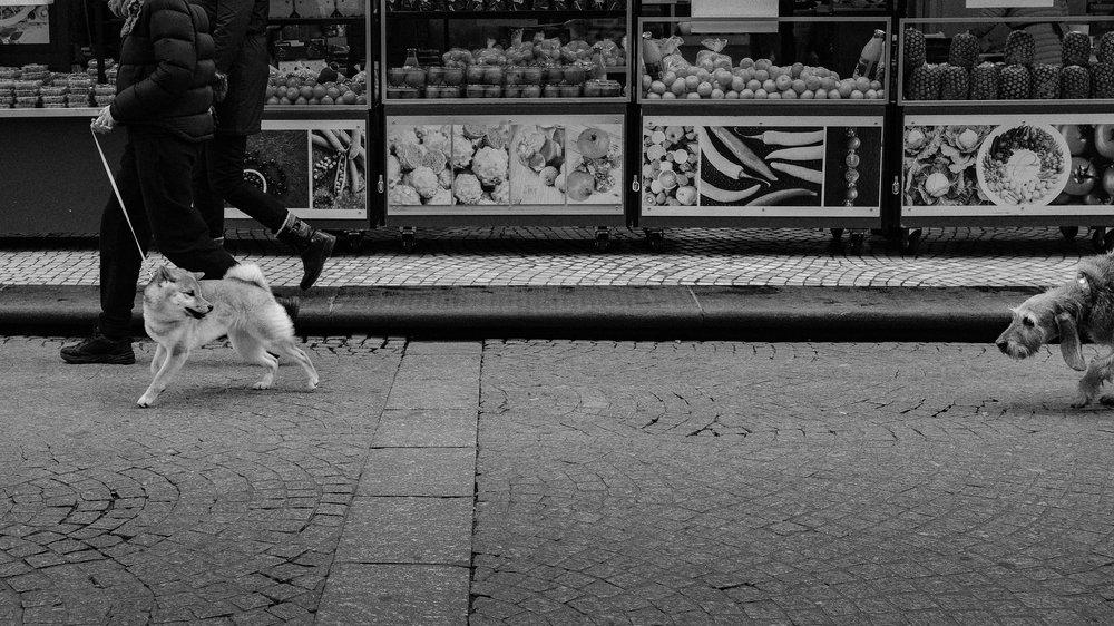 Dogs catwalk