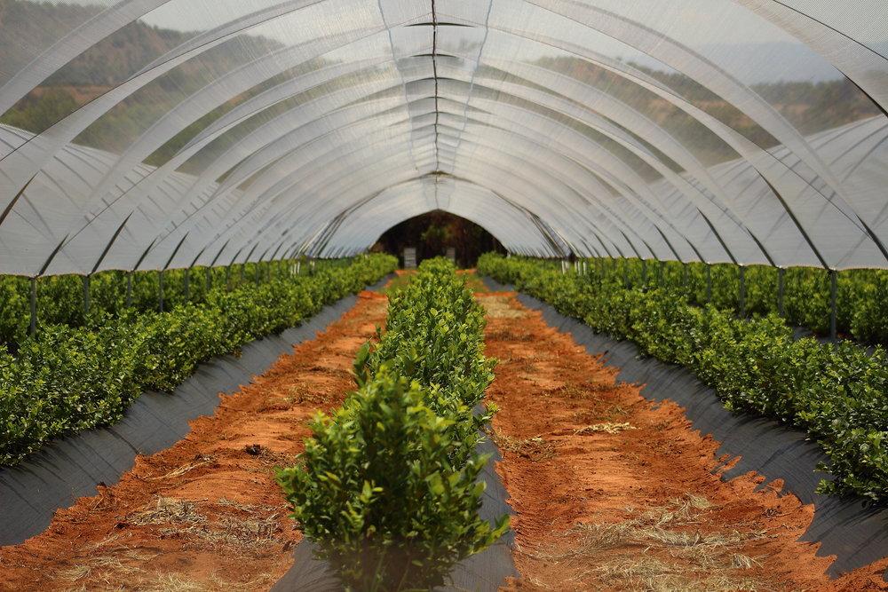 L'agriculture: Ce n'est plus ce que c'était.