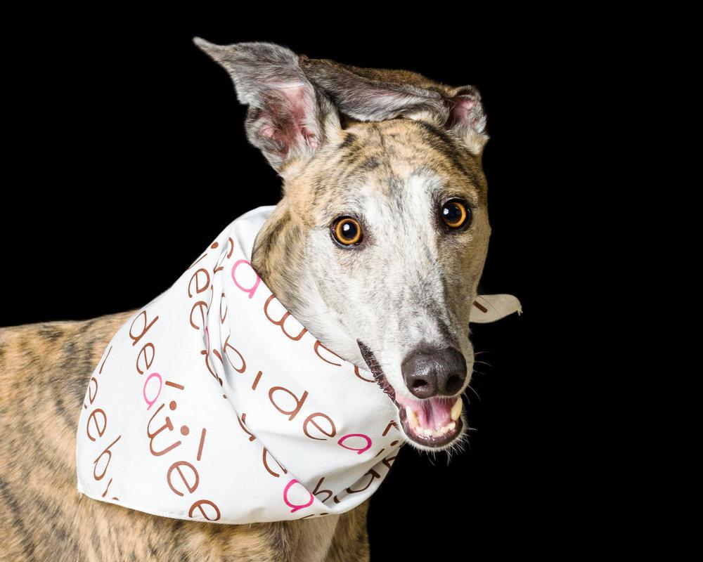 Dee is for Dogs_DSC_1743-2-Edit-2.JPG