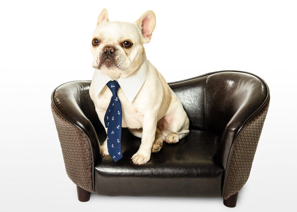 Dee is for Dogs_20120320_DSC_8478-Edit-2-Edit-Edit.JPG