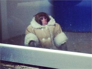 (via  Monkey in sheepskin coat shops at Ikea )