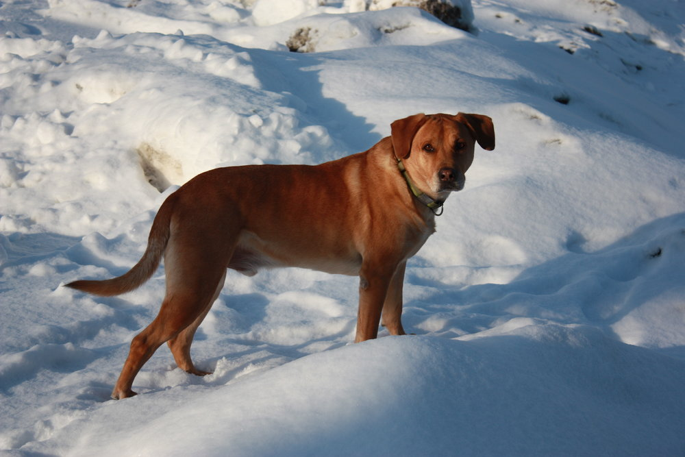 Doggone it! There's still so much snow!