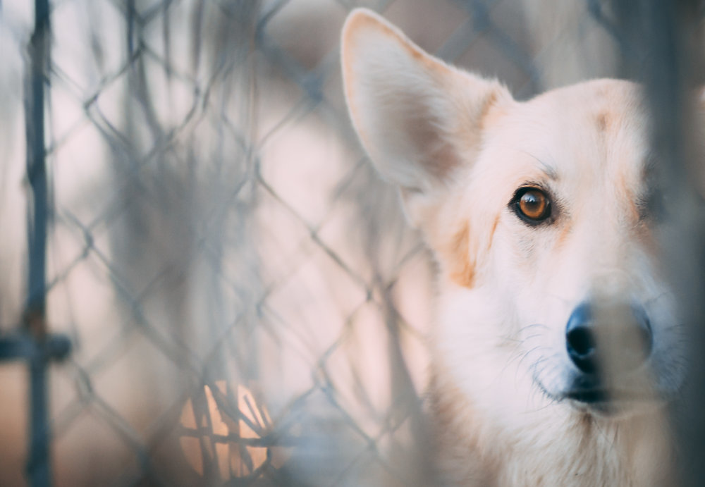 Pet-Photography-Colorado
