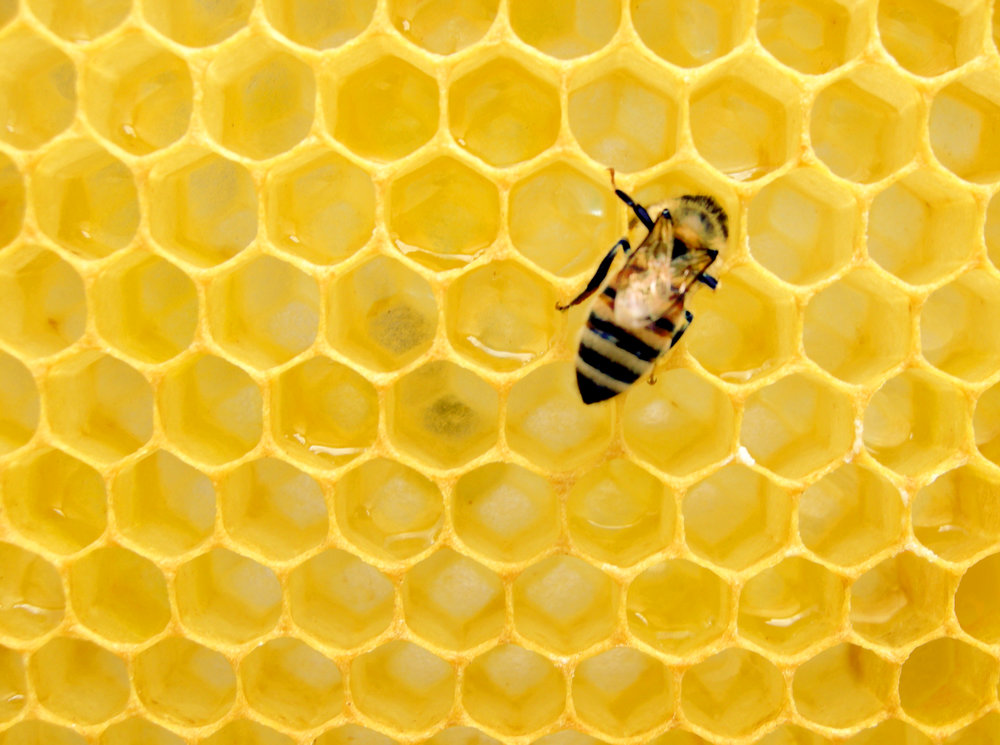 Sustainable beekeeping - What will it take to get started as a beekeeper? Learn what happens in a year in the life of a bee from catching a swarm to harvesting honey.