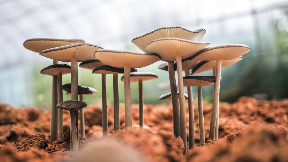 Mushrooms -